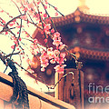 Gorgeous Pagoda and Plum Blossoms with Bamboo Fence Print by Beverly Claire Kaiya