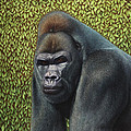 Gorilla with a Hedge Poster by James W Johnson