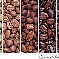 Grades of coffee roasting Print by Jane Rix