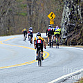 Gran Fondo Bike Ride Print by Susan Leggett
