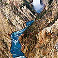 Grand Canyon of Yellowstone by Bill Gallagher