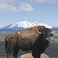 Grand Tetons Bison Print by Charles Warren