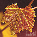 Grapevine in Fall Print by Artist and Photographer Laura Wrede