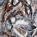 Gray Wolf Watches and Waits Print by J McCombie