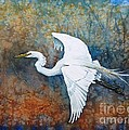 Great Egret  Poster by Zaira Dzhaubaeva