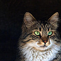 green eyes Print by Stylianos Kleanthous