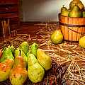Green Pears in Rustic Basket Print by Olivier Le Queinec