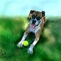 Gus the Rescue Dog Print by Colleen Taylor