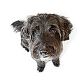 Hairy Dog Photographic Caricature Print by Natalie Kinnear