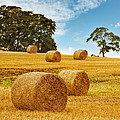 Hay Bales Poster by Amanda And Christopher Elwell