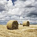 Haybales in a field in England UK Poster by Jon Boyes