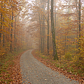 Hazy forest in autumn Print by Matthias Hauser