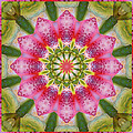 Healing Mandala 25 Poster by Bell And Todd