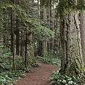 Heritage Forest Print by Randy Hall