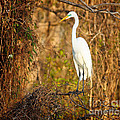 Heron on Watch Print by David Cutts