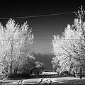 hoar frost covered trees on street in small rural village of Forget Saskatchewan Canada Poster by Joe Fox