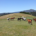 Horse Hill Mill Valley California 5D22673 Print by Wingsdomain Art and Photography