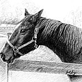 Horse in Franklin TN Print by Janet King