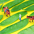 Horse riding on snow peas little people on food Print by Paul Ge
