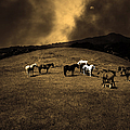 Horses of The Moon Mill Valley California 5D22673 sepia Print by Wingsdomain Art and Photography