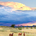 Horses On The Storm 2 Print by James BO  Insogna