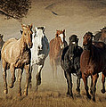 Horses Running Free Poster by Heather Swan