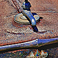 Hot faucet hood ornament Print by Garry Gay