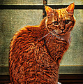 How Much is That Kitty in the Window Poster by Karen Slagle