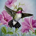 Hummer in Petunias Poster by Summer Celeste