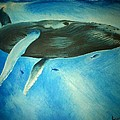 Humpback Whale Print by Lucy D