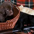 HUNTERS PUPPY DREAMS Print by Skip Willits
