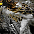 I am Redtail Poster by Bill  Wakeley