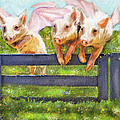 If Pigs Could Fly Print by Jane Schnetlage