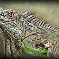 Iguana Named Mack Poster by Jeff Swanson