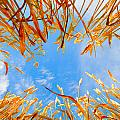 In the wheat Print by Alexey Stiop