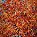 Indian Summer Print by Angela Doelling AD DESIGN Photo and PhotoArt