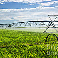 Irrigation on Saskatchewan farm Print by Elena Elisseeva