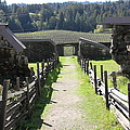 Jack London Ranch Winery Ruins 5D22180 Print by Wingsdomain Art and Photography