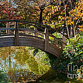 Japanese Garden in Fall Print by Iris Greenwell