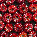 Japanese Wineberry Pattern Print by Tim Gainey