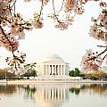 Jefferson Memorial With Reflection and Cherry Blossoms Print by Susan  Schmitz