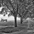 John Deer Tractor and the Avenue of Oaks Print by Scott Hansen