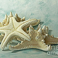 Journey to the Sea Starfish Poster by Inspired Nature Photography By Shelley Myke