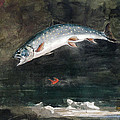 Jumping Trout Print by Winslow Homer