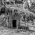Jungle Hut In A Tropical Rainforest - Black And White Print by Colin Utz