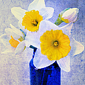 Just Plain Daffy 2 In Blue - Flora - Spring - Daffodil - Narcissus - Jonquil  Print by Andee Photography