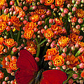 Kalanchoe plant with butterfly Print by Garry Gay