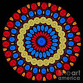 Kaleidoscope of Colorful Embroidery Poster by Amy Cicconi