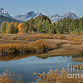 Kiss Of Fall In The Grand Tetons Poster by Sandra Bronstein