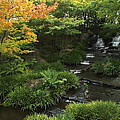 KOKOEN GARDEN WATERFALL - HIMEJI JAPAN Print by Daniel Hagerman